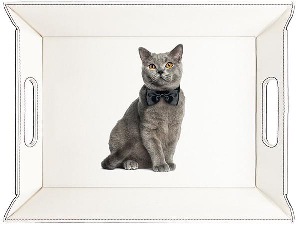 Jasper le chat